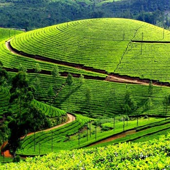 Kerala Kanyakumari - Premium Package
