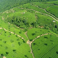Honeymoon In Munnar And Thekkady Tour