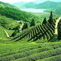 Queen of the Hills Darjeeling Tour