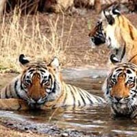 Golden  Triangle Student Tour with Ranthambore