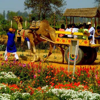 1 Day Tour To Pratap Garh Farms, Jhajjar With Dlx Bus, Breakfast & Lunch