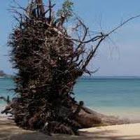 5 Nights 6 Days- Beautiful Andaman Tour