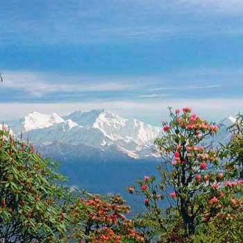 Sikkim Darjeeling 5N - 6D Tour