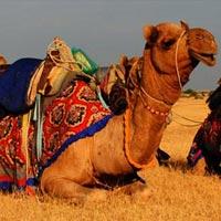 8N9D- Desert Safari Tour