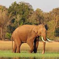 Short Tour to Kabini