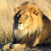 Wildlife Tour of Gujarat