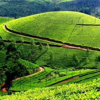 Kerala Package 4 Nights 5 Days Tour