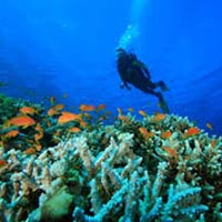 Affordable Andaman Tour