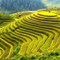 Mesmerizing Darjeeling Gangtok Package