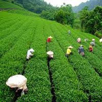 North East - Darjeeling & Gangtok Tour