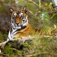 Wildlife Tour in Madhya Pradesh