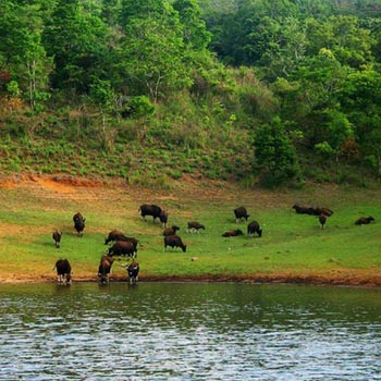 Marvellous Kerala - The God's Own Country Tour