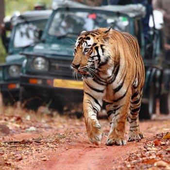 The Royal Safari 07N & 08D Tour