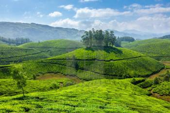 Cochin with Munnar Tour