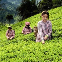 Only Darjeeling Tour 6 Days