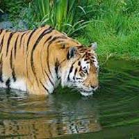 Sundarban With Pakhiralay ( Non A.C ) Tour