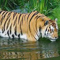 Sundarban With Pakhiralay (  A.C ) Tour