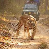 Kanha - Pench - Taroba Tour