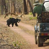 3 Days Tiger Safari in Tadoba Tour