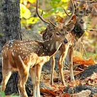 Just Pench Tour