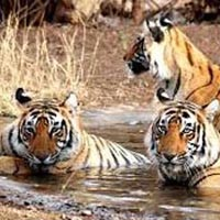 Ranthambore Short Tour