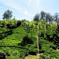 Kodai And Ooty Tour