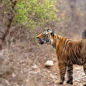 Jaipur -ranthambore-jaipur Tour
