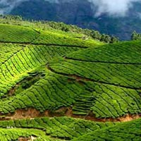 Wonderfull Kerala Tour