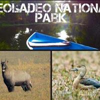 Keoladeo National Park Tour