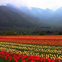 Kashmir Valley View Tour