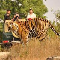Kanha Tour Package