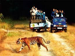 Corbett Wildlife Tour