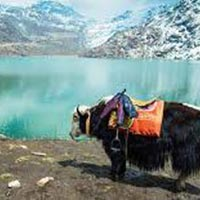North Sikkim Hidden Paradise Tour