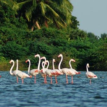 Inspiring Kerala Tour