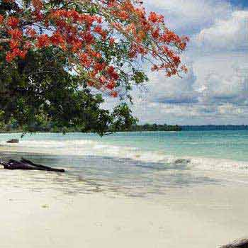 Exceptional Andaman island Tour