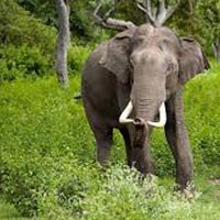 Bandipur National Park Tour