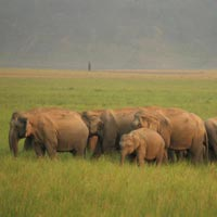 JIM Corbett & Nainital Package