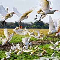 Golden Triangle Tour With Bharatpur And Ranthambore