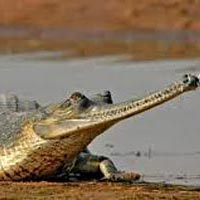 Chambal Safari Tour