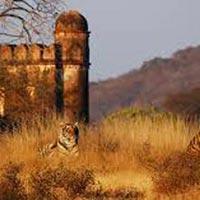 Short Escape to Ranthambore
