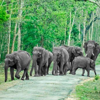 Bandipur National Park Package