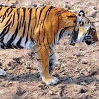 Short Escape To Sariska Package