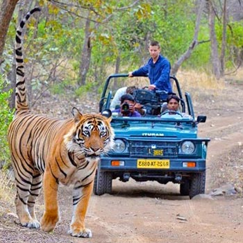 Golden Triangle With Ranthambore Park Tour