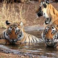 6 Nights 7 Days Golden Triangle Tour with Ranthambore