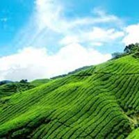 Wayanad Hill Station Tour