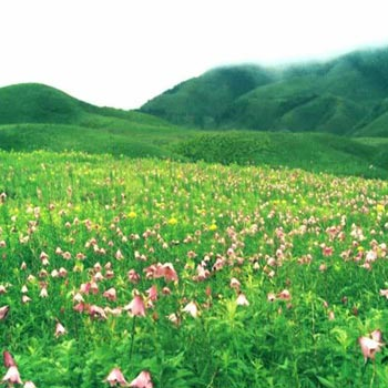 Dzukou Valley Trek Tour
