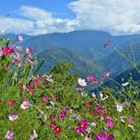 Gangtok Pelling Tour Package