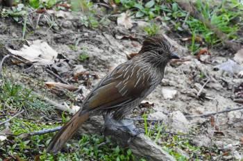 Sundarban Birding Tour : 2 Nights/ 3 Days