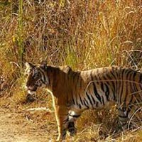 Uniquely Uttaranchal (Land Package) Tour