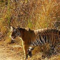 Uniquely Uttaranchal (Land Package) Tour